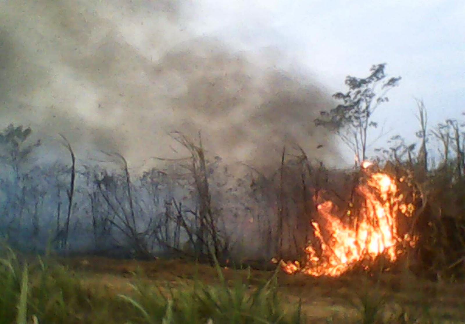 Pencemaran Lingkungan Pada Kegiatan Budidaya Pertanian dan